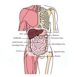 Tachyonized Liver & Gall Bladder Tonic OS-H21